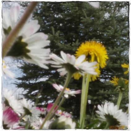 springtime2-web